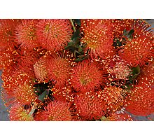 Red Proteus Flowers, Santa Barbara market Photographic Print