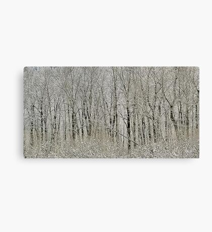 Melodies of the Woods Canvas Print
