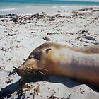 Sunkissed Seal (Wedge Island) by TFoxPhotos