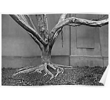 Leafless, but alive- tree overtaken by structures Poster