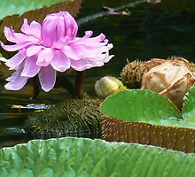 giant waterlily in pond by LisaBeth
