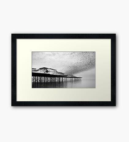 Roost. Framed Print