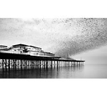 Roost. Photographic Print