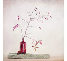 Wild rosehips in a bottle Photographic Print