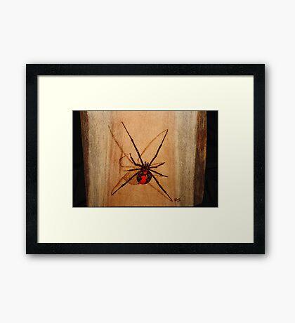 Australian Redback Framed Print