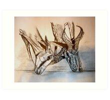 Dominance fight - Etosha National Park - Namibia Art Print