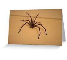 Australian Huntsman Spider Greeting Card