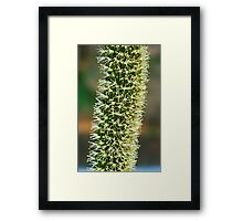 Blackboy Spike Framed Print