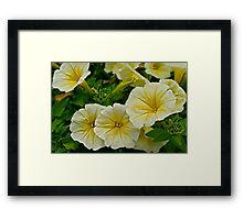 Yellow Petunias Framed Print