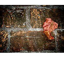 leaf... Photographic Print
