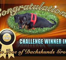 1st Place Banner Challenge - Love of Dachshunds by imagetj