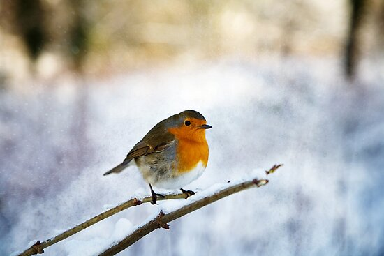 Robin in the Snow by Robert Radford