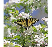 Butterfly Me Happy Photographic Print
