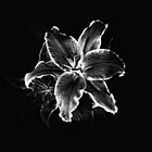 Timeless Oriental Lily by Scott Lebredo