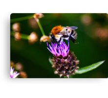 Feeding Time - Bee on Thistle Canvas Print