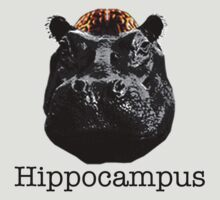 Hippocampus by Duncan Morgan