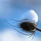 A Little Bit of Winter by Robin Webster