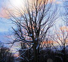 Winter Tree by teresa731