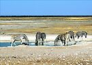 Zebras on Etosha Pan by Graeme  Hyde