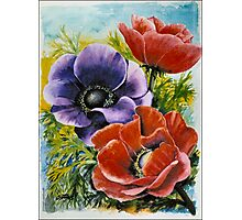 ANEMONES - AQUAREL Photographic Print