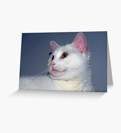 Kitten-like Greeting Card