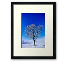 Snowlight Framed Print