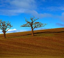 Two Tree Hill by Peter Tachauer
