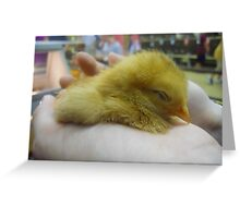 Forty Winks Greeting Card