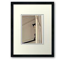 Scaredy Cat - Max Framed Print