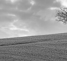 One Tree Alone? by Peter Tachauer