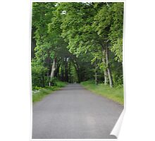 Walking trail near Hayward Wisconsin Poster