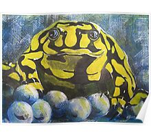 Australian Endangered Corroboree Frog Guarding Eggs Poster