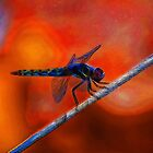 Dragon Fly by Betterphotoart