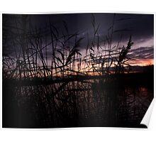 Purple Hazy Reeds - Somerset Poster