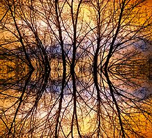 Sunset Tree Silhouette Abstract 1 by Bo Insogna