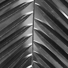 Palm Leaf 2 by Christopher Herrfurth