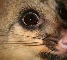 Possum Whiskers and Lashes by aussiebushstick
