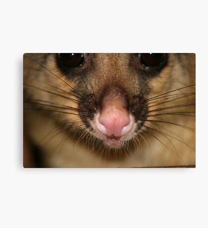 Possum's Cute Pink Nose Canvas Print