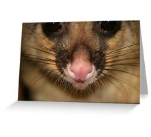 Possum's Cute Pink Nose Greeting Card