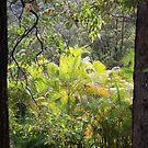 Window To The Valley by aussiebushstick