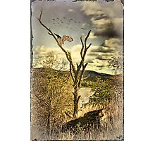 Owl's Roost Photographic Print
