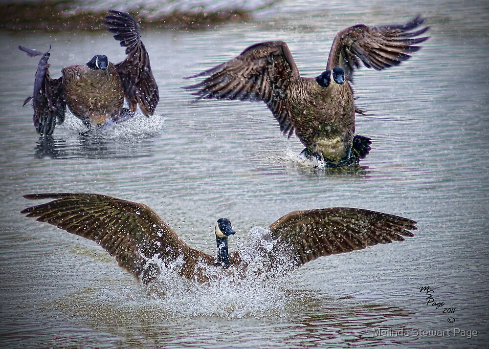 """""""Follow The Leader"""" by Melinda Stewart Page"""