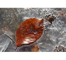 Leaf on Ice Photographic Print