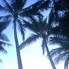 Tiny Moon - Palm Cove FNQ by tareeskate