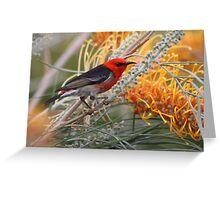 Scarlet Honeyeater Greeting Card