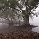 Gum Trees in the Fog by Barb Leopold