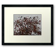 Grackles for a Crown Framed Print