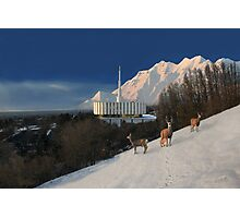 Winter Guests at the Provo Temple 20x30 Photographic Print
