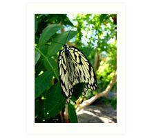 Folding your Wings Art Print