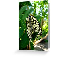 Folding your Wings Greeting Card